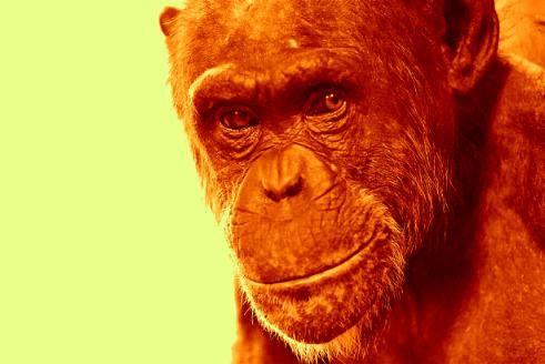 Cimpanzeii din labirintul virtual