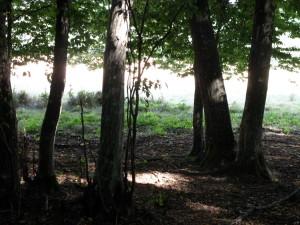 Misterele din Padurea Geamana