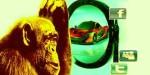 Obsesia Sinelui – Gânduri despre Tipologia Jocului Social