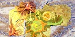 Tinereţe fără de bătrâneţe şi inteligenţă regenerativă