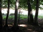 Misterele din Pădurea Geamăna